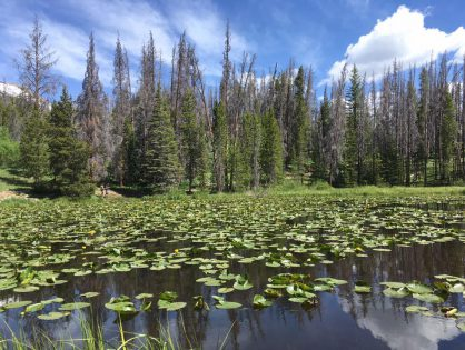 Lily Pad Lake . Summit County