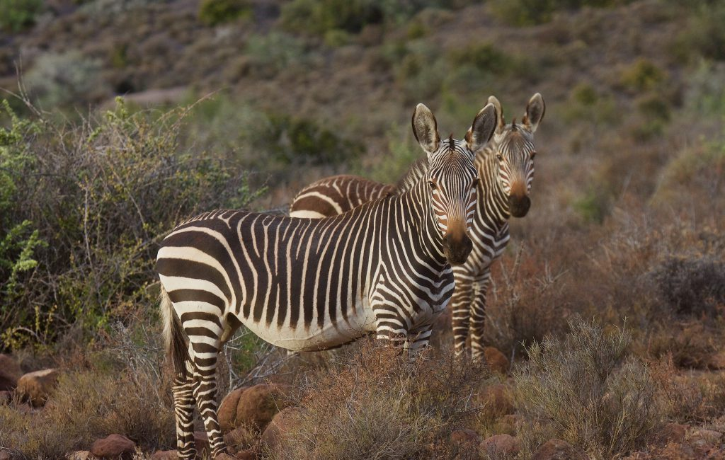 Karoo National Park . South Africa