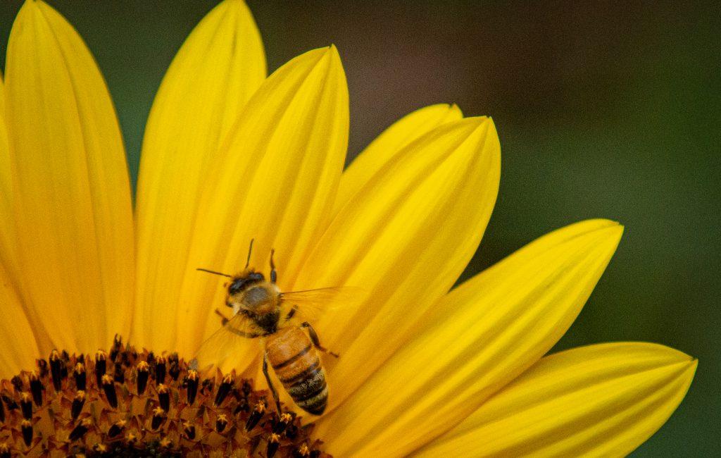 Worker Bee.